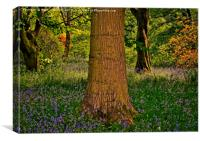 Magical Spring Woodland, Canvas Print