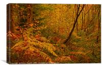 Autumn Woodland Colours, Canvas Print