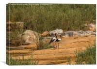 A pair of Saddle-Billed Storks, Canvas Print