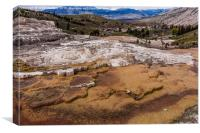Travertine Terraces - Yellowstone , Canvas Print