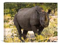 Namibian Black Rhinoceros , Canvas Print