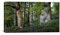 Gnarled old trees, Canvas Print