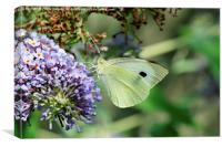 Green Veined White butterfly, Canvas Print