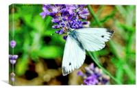 The small white butterfly, Canvas Print