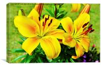 Beautiful Yellow Lillies, Canvas Print
