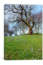 Spring is nearly here, Canvas Print