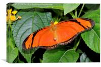 Caroni Flambeau (The Flame) butterfly, Canvas Print