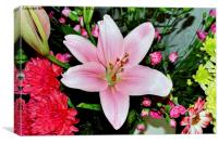 Beautiful pink lily in all its glory, Canvas Print