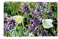 Two 'large white' butterflies, Canvas Print