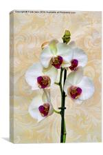 Beautiful White Phalaenopsis Orchid, artistically, Canvas Print
