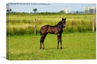 Newly born foal looking around his new world, Canvas Print