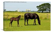 Mare and her newly-born foal, Canvas Print