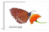 The Oriental Great Eggfly, Canvas Print