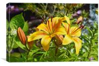 Two beautiful yellow Lilies, Canvas Print