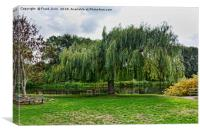 A massive Salix Babylonica by the River Trtent, Canvas Print