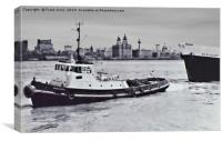 The last of my B&W mounted print scans. Tug Hazelg, Canvas Print