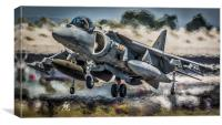 Harrier Hover, Canvas Print