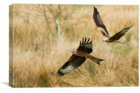 Red Kites in Flight, Canvas Print