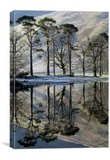 Buttermere Pines, Canvas Print