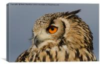 Eagle owl looking left, Canvas Print