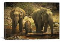 Elephants, Canvas Print