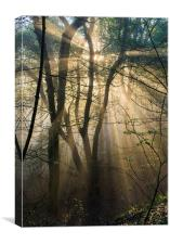 Misty woodland, Canvas Print