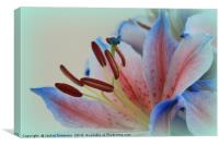 Asiatic Lily, Canvas Print