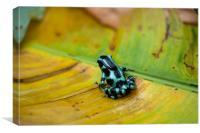 Green and Black Poison Dart Frog, Canvas Print