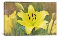 Field of Lilies, Canvas Print