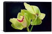 Beautiful Green Orchids, Canvas Print