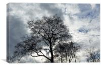 clouds and branches, Canvas Print