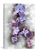 Lilac blooming, Canvas Print