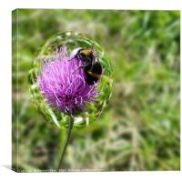 Bee in bubble, Canvas Print