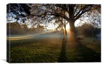 Early morning fog and sunrise, Canvas Print