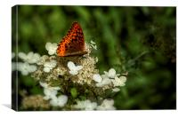 Butterfly on a Hydrangea No. 2, Canvas Print