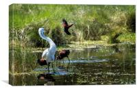 The Ibis Ignore the High Drama at the Pond, Canvas Print