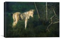 Little Blue-Eyed Filly, Canvas Print