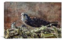 Osprey and Young - Feeding, Canvas Print