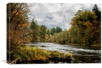 Fall on the McKenzie River, Canvas Print