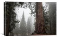 A Giant in the Fog, Canvas Print