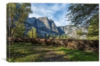 A Fallen Tree in Cook's Meadow, Canvas Print