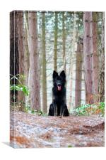 Dog in the Forest, Canvas Print