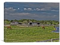 Ponies of Ocracoke, Canvas Print