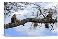 JST2634 African Tawny Eagles, Canvas Print