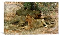 JST2892 Trio of young lions, Canvas Print