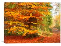 Beech Woodland in Autumn, Canvas Print