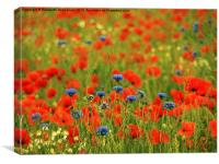 Poppies and Cornflowers, Canvas Print