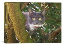 Stare Cat in a Yew Tree, Canvas Print