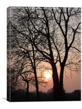 Tree Sihouettes at Dusk, Canvas Print