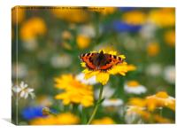 Small Tortoiseshell in Wild Flowers, Canvas Print